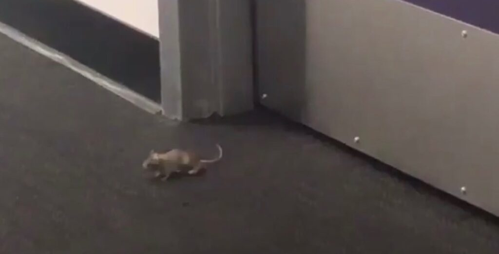 Mice have been spotted in the newly reopened Little Building. Photo: Carly Thompson/Special to The Berkeley Beacon