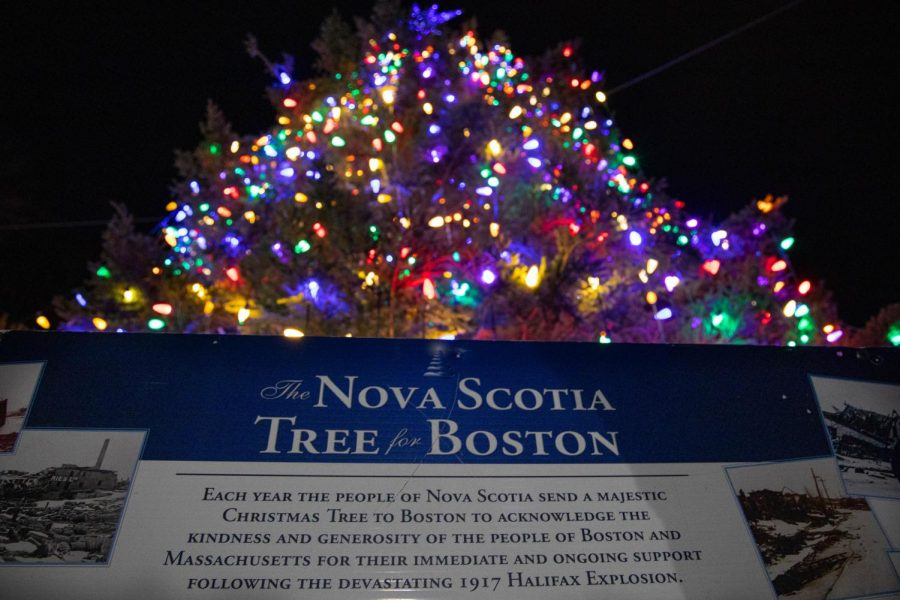 The Nova Scotia Tree for Boston lit up just under two weeks after arriving in the Common.